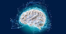Какое количество энергии достаточно для полноценной работы мозга